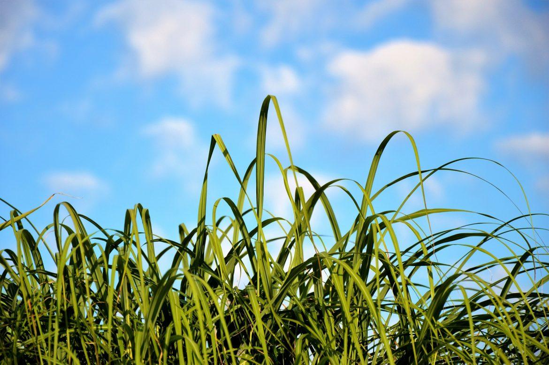 grass-2551342_1920.jpg